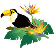 オオハシと極楽鳥花
